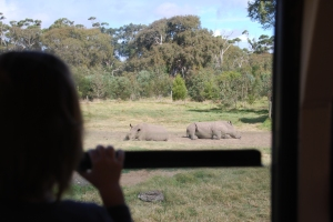 Child in silouhette watching rhinos