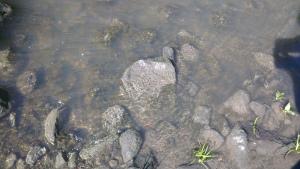 Water rippling in the sun, Merri Creek